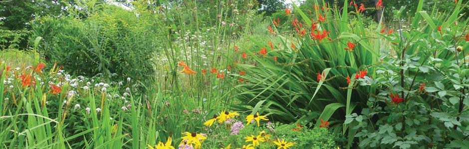 header-garden